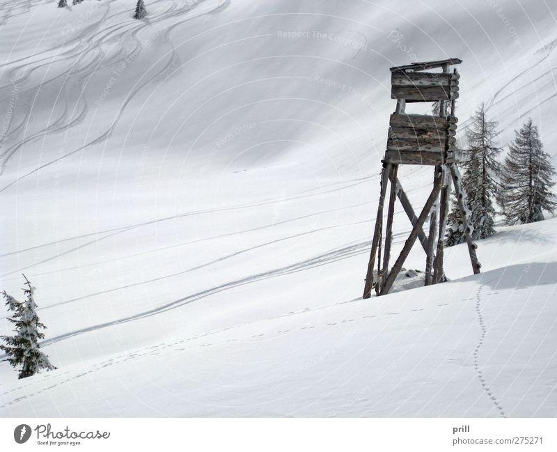 skiing in Wagrain Tourismus Winter Berge u. Gebirge Sport Wintersport Skipiste Landschaft Hügel Hochsitz frisch kalt weiß Idylle europäische alpen