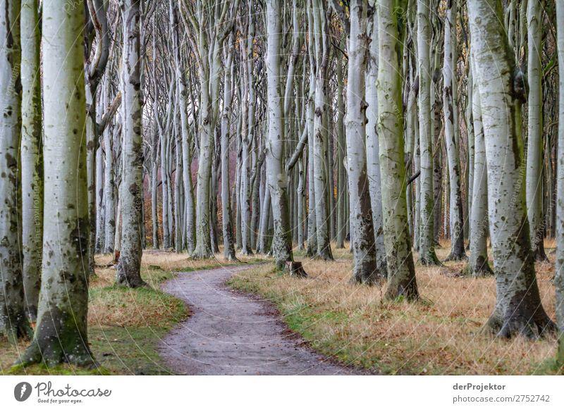 Gespensterwald in Nienhagen XIII Zentralperspektive Kontrast Licht Tag Textfreiraum Mitte Textfreiraum unten Textfreiraum links Textfreiraum rechts