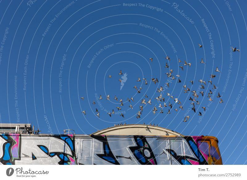 Berlin Stadt Hauptstadt Stadtzentrum Altstadt Skyline Menschenleer Bauwerk Gebäude Verkehr Verkehrsmittel Personenverkehr Öffentlicher Personennahverkehr
