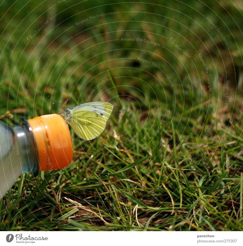 Schmetterling sitzt auf Deckel einer plastikflasche. Mensch und Natur. Nachhaltigkeit, Umweltverschmutzung Flasche Tier Klima Gras Wiese Kunststoff sitzen
