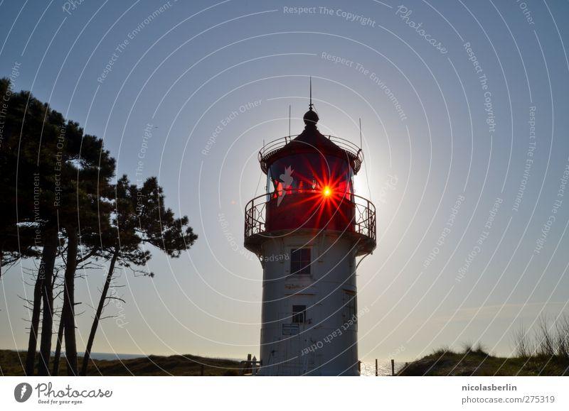 Hiddensee | Shine On Old Boy alt Baum Sonne Architektur Küste Gebäude elegant Insel leuchten Sicherheit Bauwerk historisch Ostsee Leuchtturm