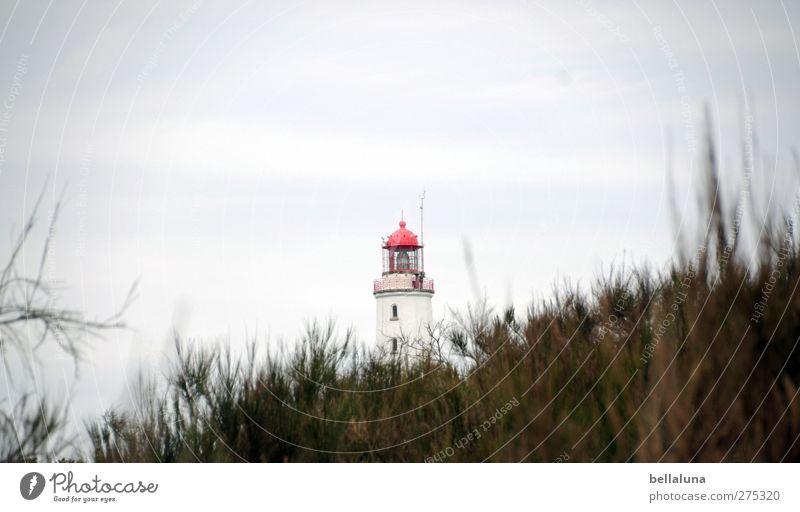 Hiddensee | Rotkäppchen II Himmel weiß grün rot Pflanze Wolken Gras Küste braun Insel Sträucher Ostsee Leuchtturm Grünpflanze Wildpflanze