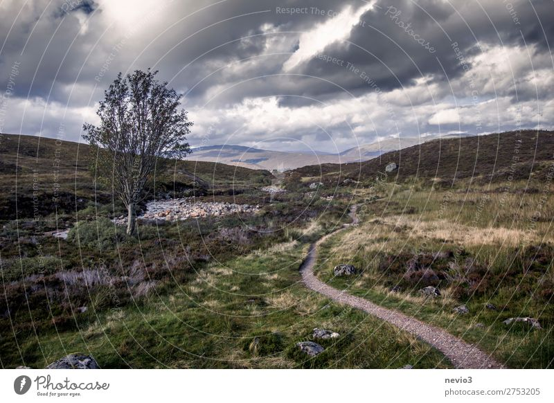 Schottisches Hochland Natur Landschaft Baum Gras Sträucher Grünpflanze Nutzpflanze Wiese Feld Unendlichkeit kalt wandern Wanderpfad Wege & Pfade Fußweg