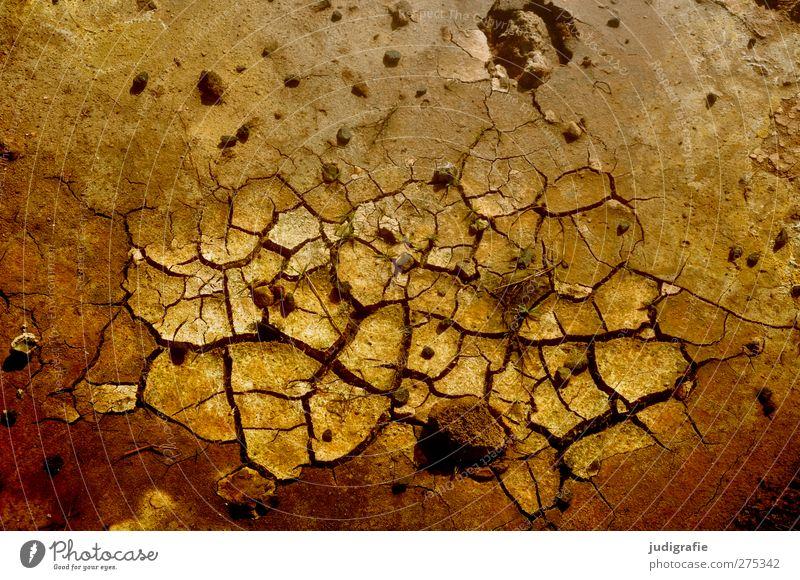 Island Umwelt Natur Urelemente Erde natürlich trocken braun Riss Farbfoto Außenaufnahme Nahaufnahme Strukturen & Formen