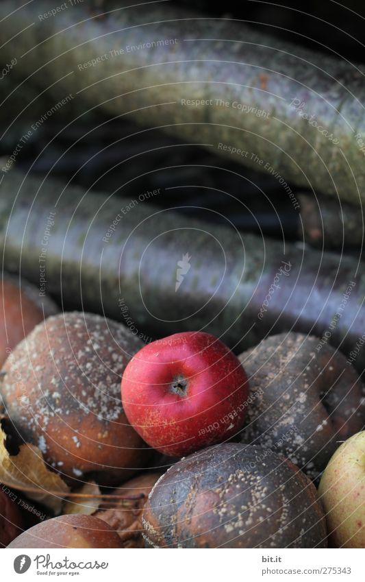 Allein unter Faulpelzen Natur alt rot Umwelt Lebensmittel Herbst Garten braun Gesundheit liegen natürlich frisch Apfel