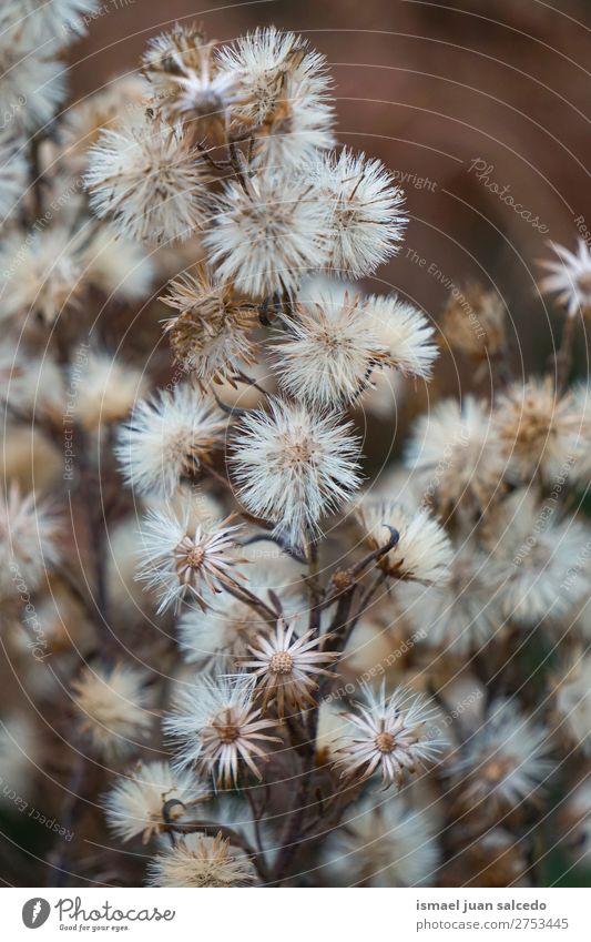 weiße Löwenzahnblume Blume Pflanze Samen geblümt Garten Natur Dekoration & Verzierung abstrakt Konsistenz weich Außenaufnahme Hintergrund romantisch