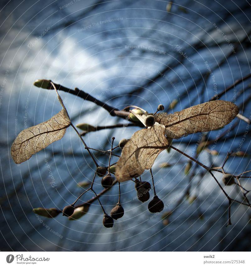 Ausblick Himmel Natur blau weiß Baum Pflanze Wolken schwarz Umwelt klein braun natürlich wild Wachstum Wandel & Veränderung Hoffnung