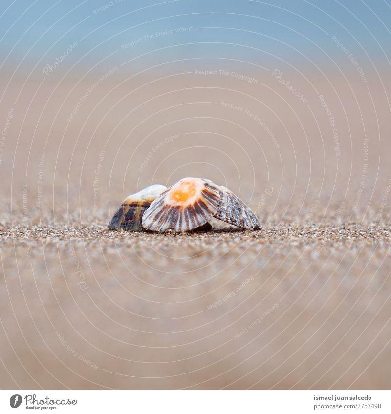 Muschel auf dem Sand Panzer Strand Felsen Meer Wellen Wasser Küste Außenaufnahme Ferien & Urlaub & Reisen Ausflugsziel Platz Natur Landschaft Hintergrund ruhig