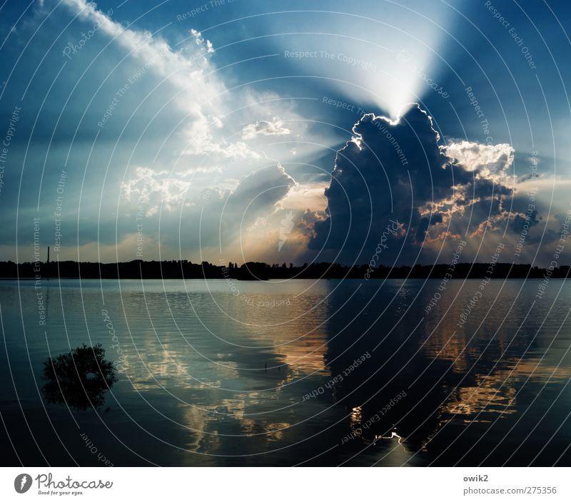 Vor dem Donner Umwelt Natur Landschaft Pflanze Himmel Gewitterwolken Horizont Klima Klimawandel Wetter Schönes Wetter Wildpflanze Wasserpflanze Wald Seeufer