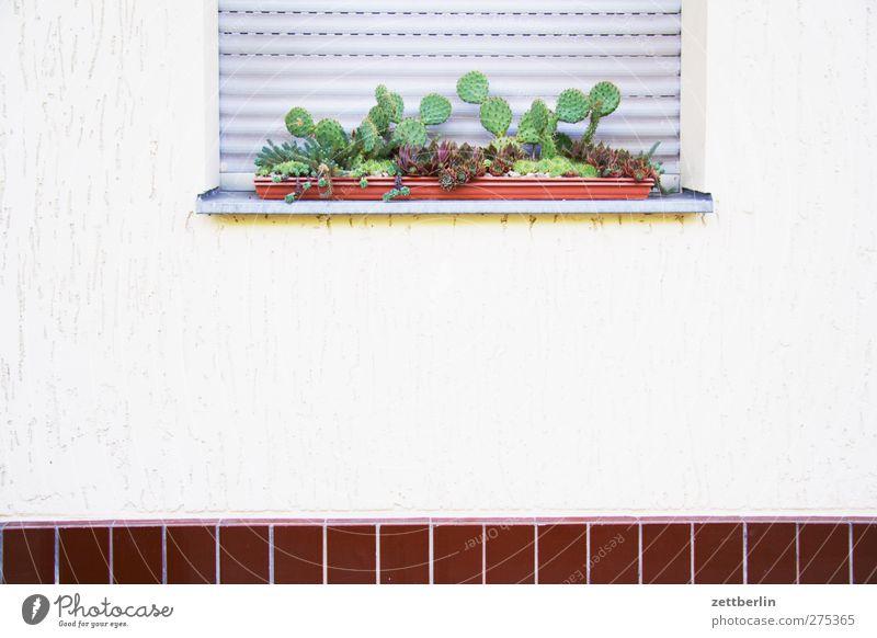 Exotik Ferien & Urlaub & Reisen Ausflug Häusliches Leben Haus Sommer Pflanze Kaktus Grünpflanze Nutzpflanze Stadt Stadtzentrum Bauwerk Gebäude Architektur Mauer