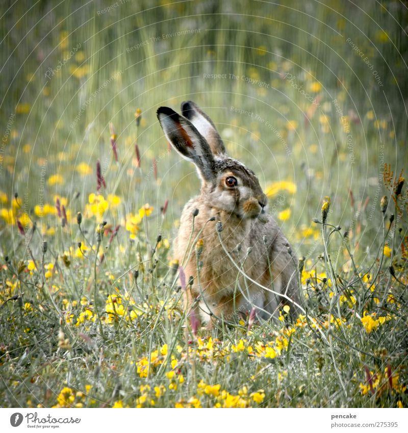 kampfhase | limfjorden Natur schön Pflanze Sommer Tier Wiese Gras natürlich Kindheit Wildtier frei authentisch Geschwindigkeit weich einzigartig Freundlichkeit