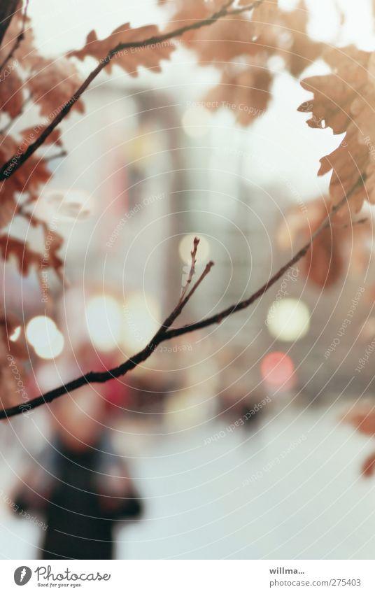 Vor einem kalten Winter Herbst Baum Eichenblatt Zweige u. Äste Stadt Haus Hochhaus Stadtleben Stadtlicht November trist Mensch Leuchtreklame Unschärfe