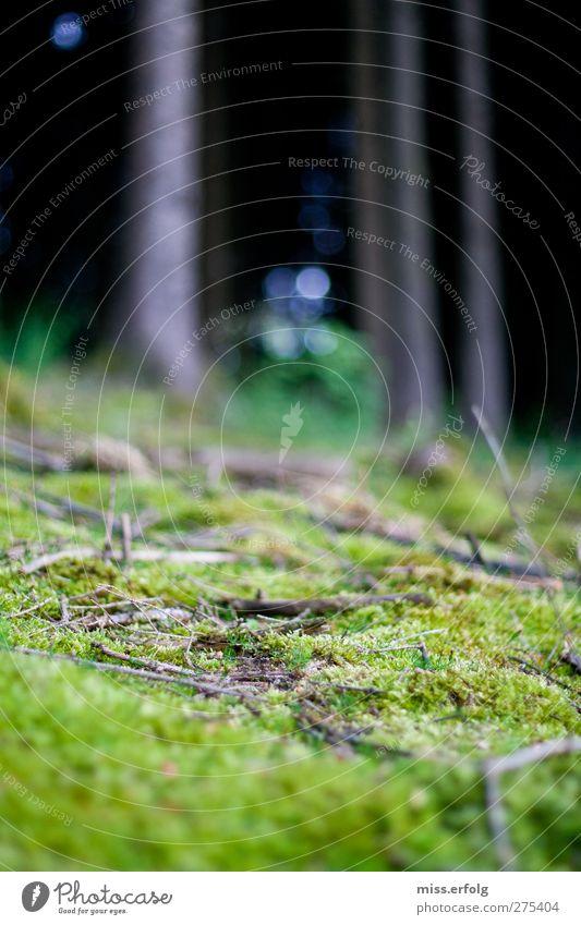 geWALDig II Natur Pflanze blau grün schön Baum Landschaft Tier schwarz Umwelt Leben außergewöhnlich Zufriedenheit authentisch Fröhlichkeit ästhetisch