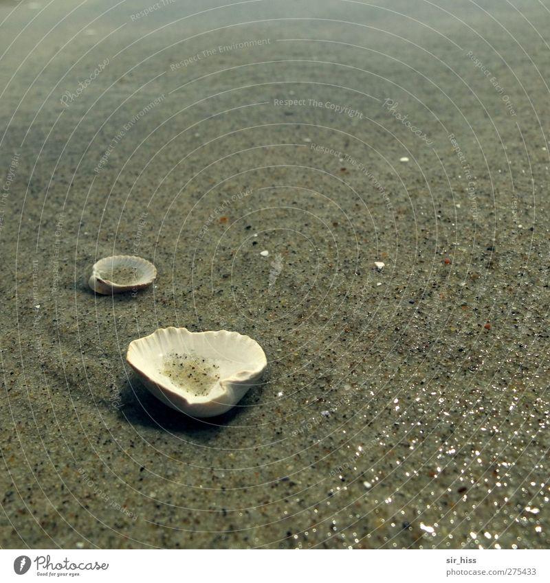 Hiddensee | Muschelsuppe Natur Wasser Meer Strand Einsamkeit ruhig Erholung kalt grau Sand braun glänzend dreckig elegant authentisch ästhetisch