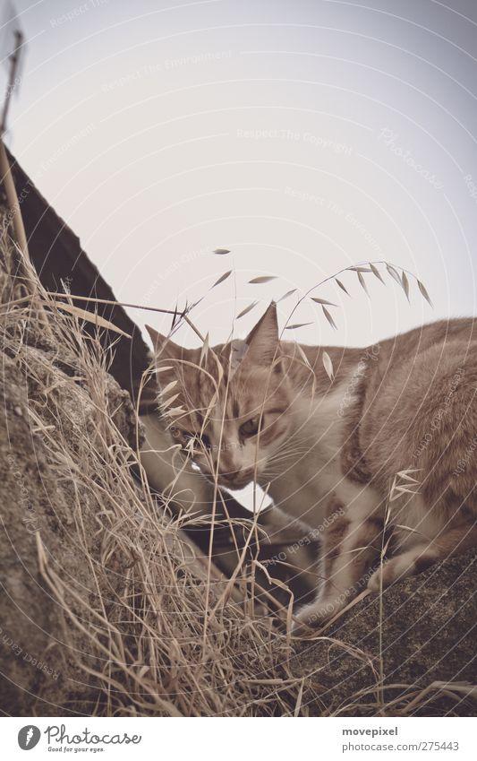 Eck mit Katze Mauer Wand Dach Haustier 1 Tier Blick Farbfoto Außenaufnahme Textfreiraum oben Tierporträt Blick in die Kamera