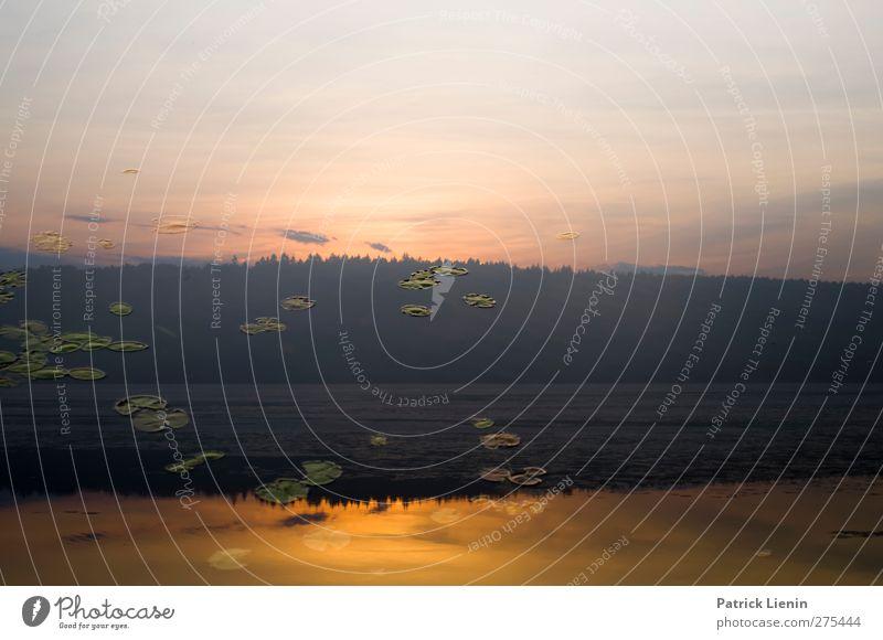 Undiscovered Colors Umwelt Natur Landschaft Urelemente Luft Wasser Himmel Wolken Sonnenaufgang Sonnenuntergang Sonnenlicht Sommer Klima Schönes Wetter Seeufer
