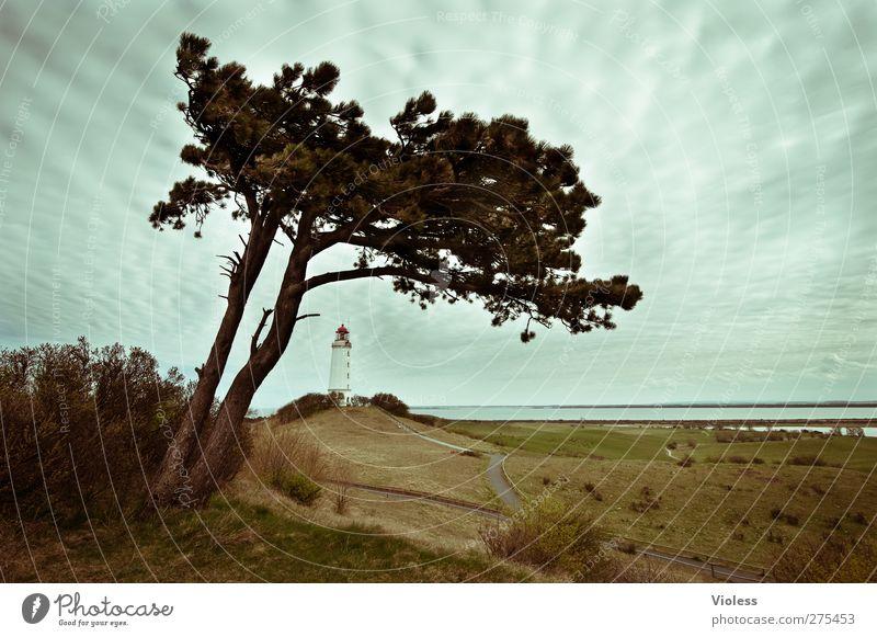 Hiddensee | ... Lost in...... Himmel Wolken Architektur Gebäude Turm Bauwerk entdecken Leuchtturm Kiefer