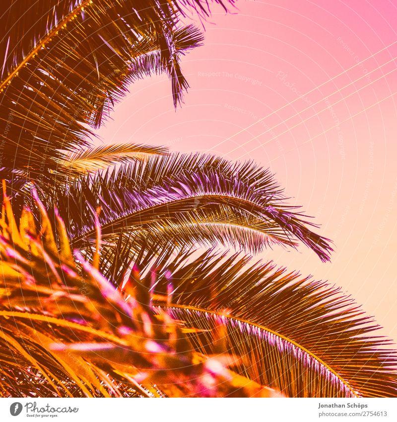 Palme In Neon Retro Farben Ein Lizenzfreies Stock Foto Von Photocase