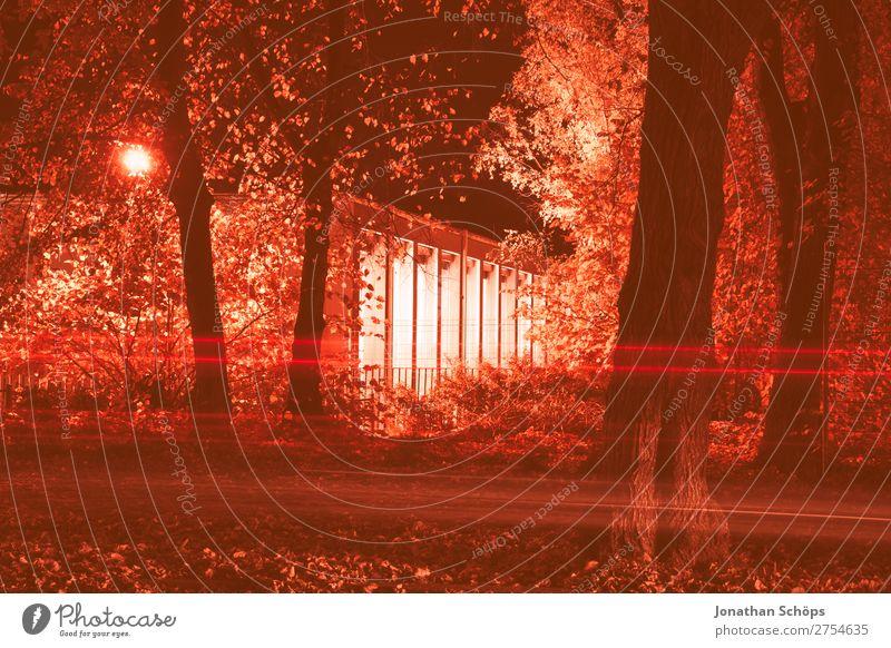 Nachts in Weimar Baum Straße Herbst rosa Verkehr Nachtaufnahme Korallen Farbkarte