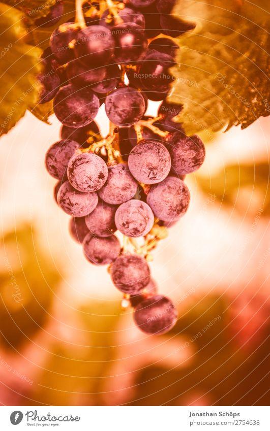Weintraube in einem Weinberg Wege & Pfade rosa Frankreich Weintrauben Korallen Südfrankreich Farbkarte