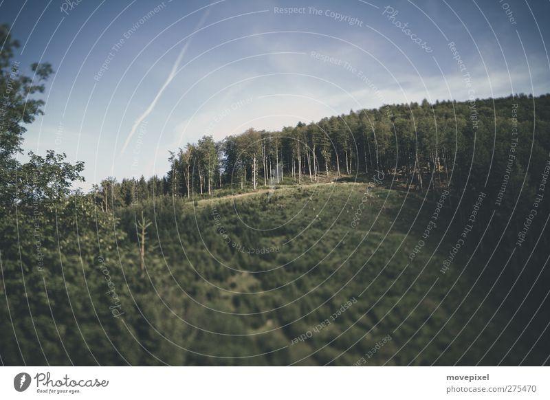 Waldschneise blau grün Landschaft Wald Umwelt Hügel Forstwirtschaft Abholzung Monokultur