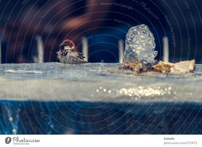 Badender Spatz Wasser Tier Wärme Vogel Schwimmen & Baden Wildtier Schönes Wetter