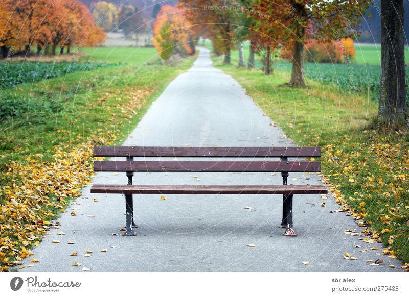 Generation ...plus Natur Baum Pflanze Blatt Wald Landschaft Umwelt Herbst Traurigkeit Park gehen Spaziergang Pause 60 und älter 50 plus Fußweg