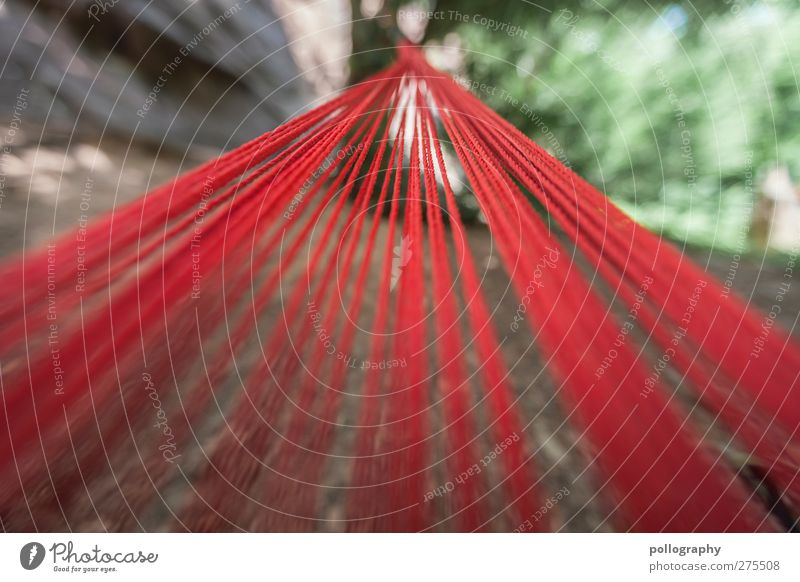 alle Wege führen nach.... grün Baum Sommer rot Pflanze Wald Linie Park Erde Seil Perspektive Schnur Hängematte gebunden befestigen Fluchtpunkt
