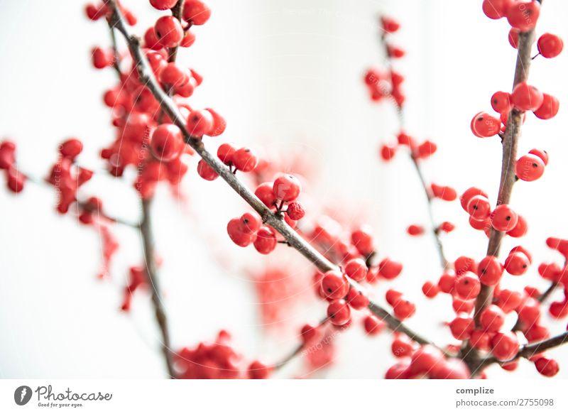 Ilex Zweige | Dekoration zur Weihnachtszeit Lifestyle Stil Design Häusliches Leben Wohnung Innenarchitektur Feste & Feiern Weihnachten & Advent Natur Winter