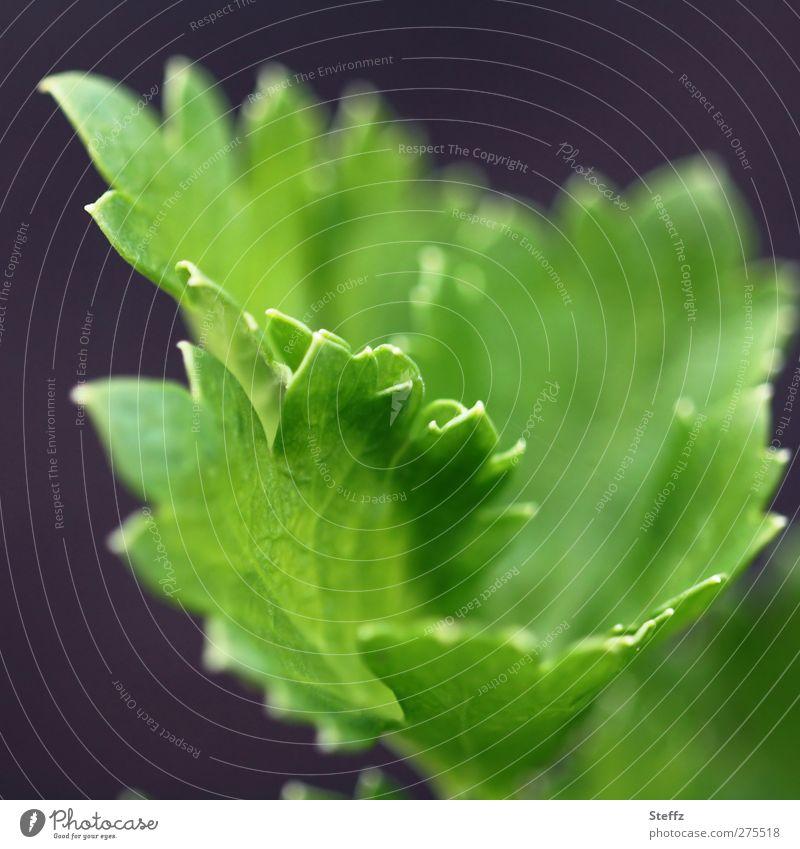 Sellerie - rein vegan Gemüse Jungpflanze Gartengemüse Suppengrün Lebensmittel Suppengemüse Ernährung Bioprodukte Vegane Ernährung Nutzpflanze Gemüsegarten