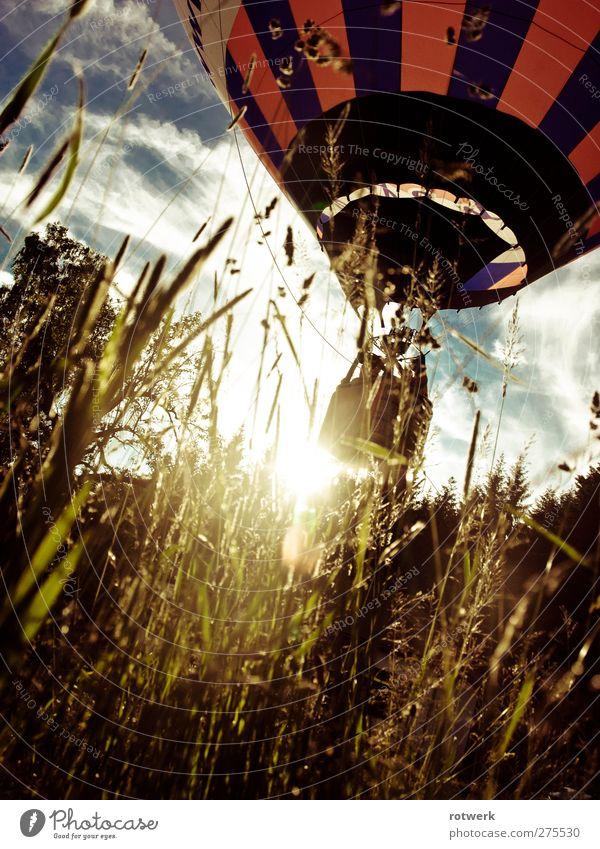 Grillentraum Freizeit & Hobby Ausflug Abenteuer Ferne Sommer Sonne Natur Pflanze Wolken Schönes Wetter Baum Gras Wiese Wald Fluggerät Ballone Ballonkorb