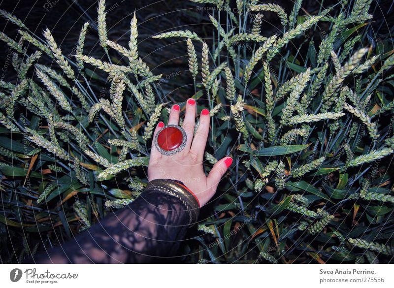samstag nachts III feminin Junge Frau Jugendliche Arme Hand Finger 1 Mensch Korn Kornfeld Mode Spitze Accessoire Schmuck Ring festhalten einzigartig trashig