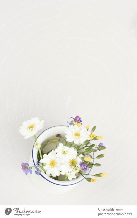 Blumen von einer glücklichen Wiese Natur schön Sommer weiß gelb Blüte Gefühle Frühling Glück Garten Feste & Feiern hell Häusliches Leben Dekoration & Verzierung