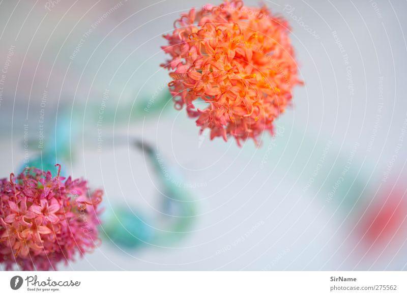203 [unscharf gemalt] Natur blau grün schön Blume Blatt Wiese grau Garten Kunst Park orange rosa natürlich frisch Fröhlichkeit