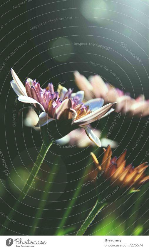 fruchtig Natur grün Pflanze Blume Farbe Blatt Landschaft Wärme Gras Blüte Kunst Stimmung Wetter rosa frei frisch