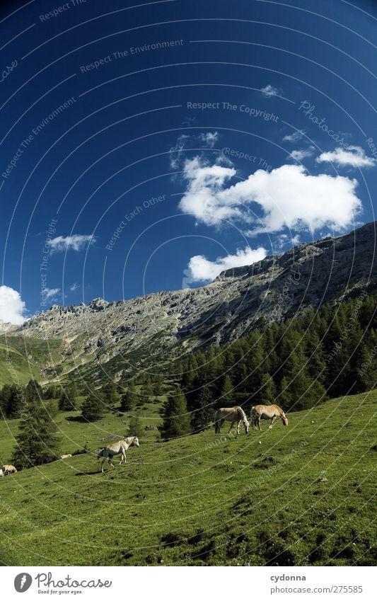 Bergidylle Himmel Natur Ferien & Urlaub & Reisen Sommer Einsamkeit ruhig Erholung Landschaft Ferne Umwelt Wiese Berge u. Gebirge Freiheit träumen Horizont