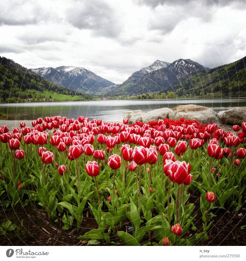 Schliersee Himmel Natur Wasser Ferien & Urlaub & Reisen schön Blume Wolken Wald Landschaft Umwelt Berge u. Gebirge Leben Gefühle träumen Zeit Regen