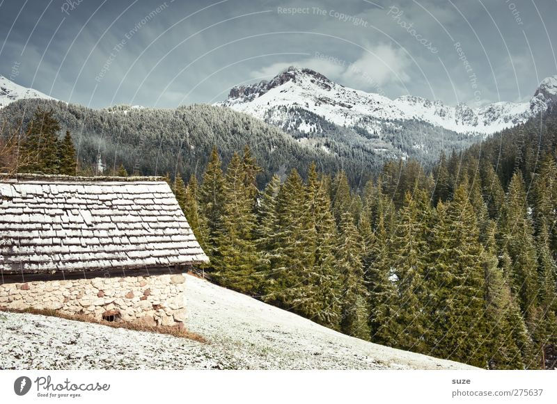 Berghütte Himmel Natur Pflanze Haus Wald Landschaft Umwelt Wiese kalt Berge u. Gebirge Schnee Frühling Klima authentisch Häusliches Leben Urelemente