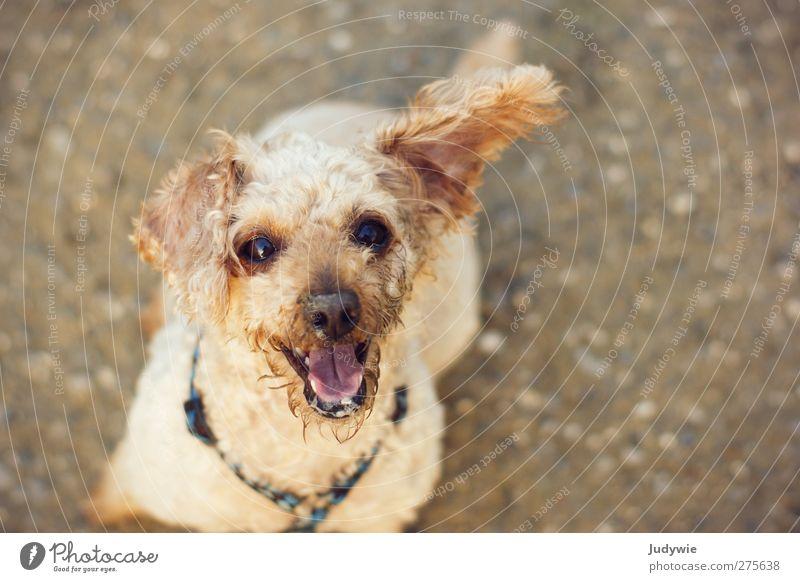 Schmutzig aber glücklich! Hund Sommer Freude Tier Umwelt Leben Herbst Spielen Gefühle Glück klein Stimmung braun blond Freizeit & Hobby dreckig