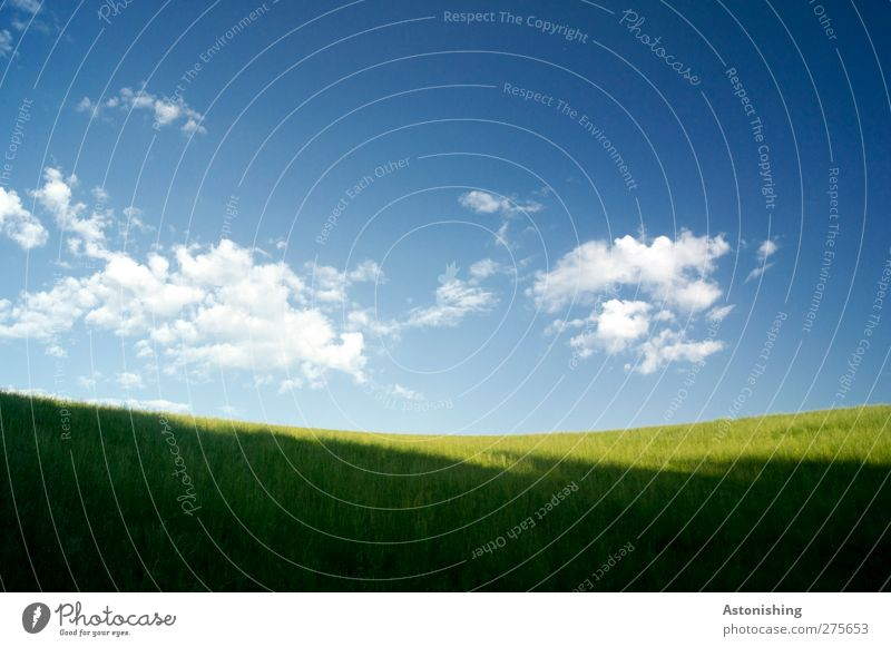 unspektakulär Himmel Natur blau weiß grün Sommer Pflanze Wolken ruhig Landschaft gelb Umwelt Wärme Gras Horizont Wetter