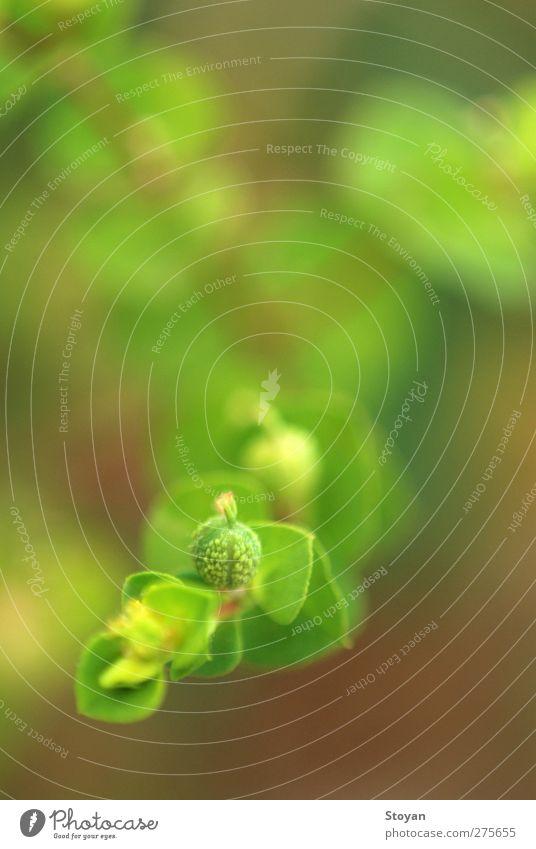 abstrakte Pflanze Sonne Sommer Blume Gras Sträucher Moos Blatt Grünpflanze Wildpflanze Wiese Feld Wald Urwald planen Wachstum Farbfoto Nahaufnahme