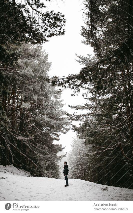 Touristen stehen im verschneiten Wald Mann Backpacker Straße Winter Natur Schnee kalt Frost Jahreszeiten Landschaft weiß schön ländlich gefroren