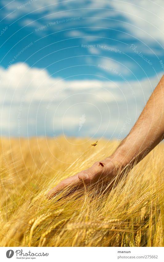 Landliebe Himmel Natur Hand Sommer Pflanze Landschaft Umwelt Feld natürlich Wachstum berühren Landwirtschaft Ernte reif Kontrolle Ackerbau