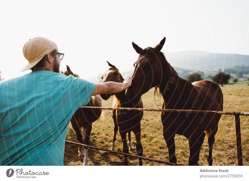 Mann füttert Pferde Herde Zaun Landschaft Bauernhof Natur Hengst ländlich Feld Tier Weide Ranch Gras Säugetier braun heimisch Reiterin pferdeähnlich