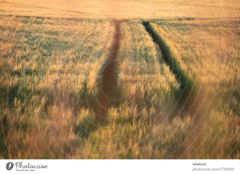 Felder Lebensmittel Landwirtschaft Forstwirtschaft Umwelt Natur Landschaft Sommer Herbst Schönes Wetter Wiese Arbeit & Erwerbstätigkeit Blühend