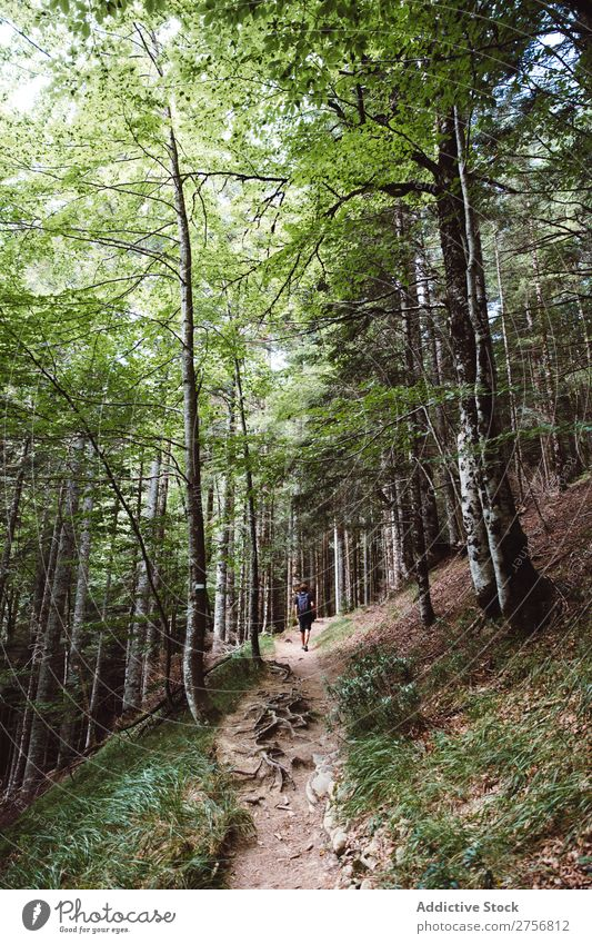 Mann wandert im Wald Tourist wandern Ferien & Urlaub & Reisen Natur Abenteuer Wege & Pfade Ausflug Mensch Lifestyle Tourismus Freizeit & Hobby Trekking Aktion