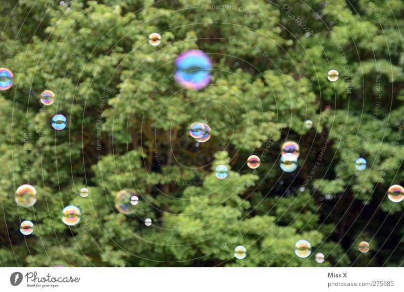 Bubble Luft fliegen rund Seifenblase viele Baum Farbfoto Außenaufnahme Muster Menschenleer