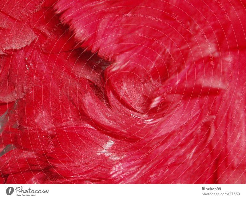 Federhaufen rot Hintergrundbild weich Haufen