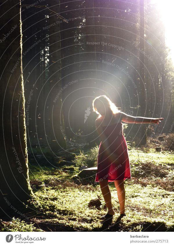 Die Waldfee Frau Erwachsene 1 Mensch 18-30 Jahre Jugendliche Fee Natur Sonne Sonnenaufgang Sonnenuntergang Sommer Baum Moos Märchenwald Kleid blond leuchten