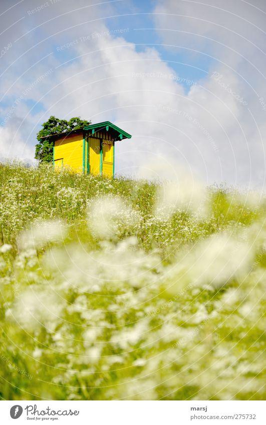 Klein und doch nicht mein Himmel Natur blau grün Sommer Pflanze Blume Wolken Haus Landschaft gelb Wiese Frühling Gras Wohnung Häusliches Leben